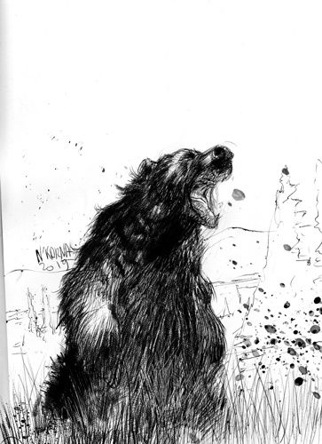 #inktober ours illustration dessin drawing ink bear angry nature animaux canada noir et blanc sauvage