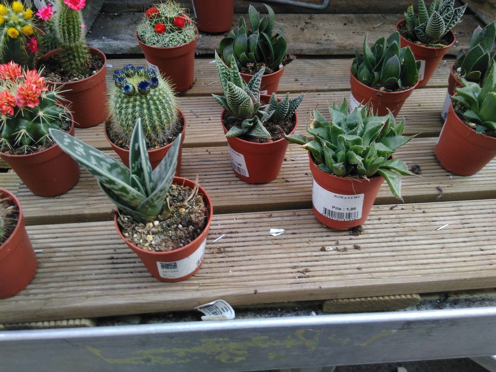 Comment Faire Un Terrarium Plante Grasse notre terrarium plantes grasses - mots et maux d'isa