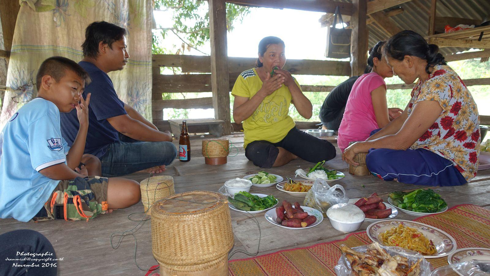 Dans la chaleur des rizières, la récolte du riz (Thaïlande, Roi Et, Isaan)