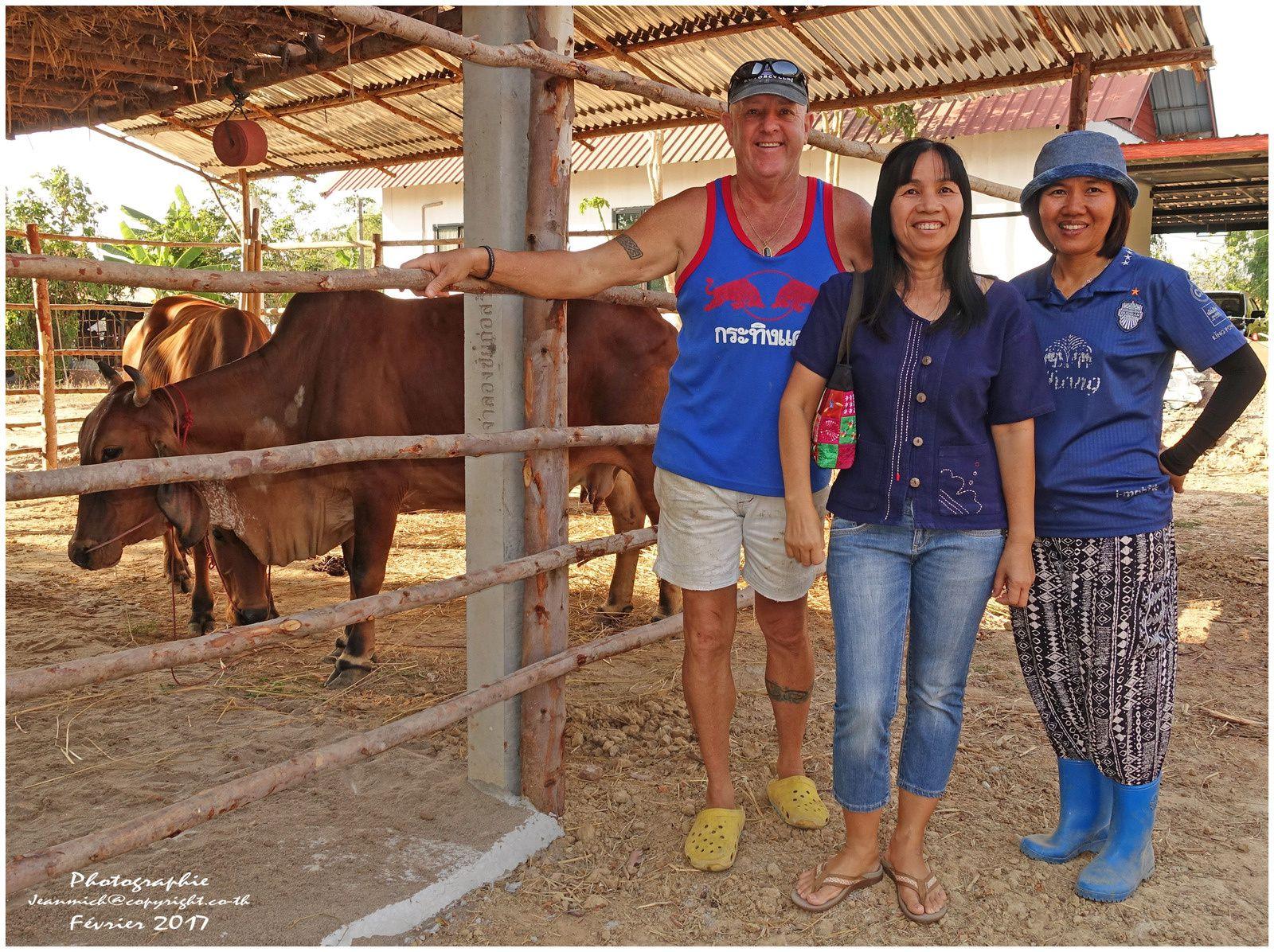 Un nouveau couple de fermiers australiens.... (Thaïlande)