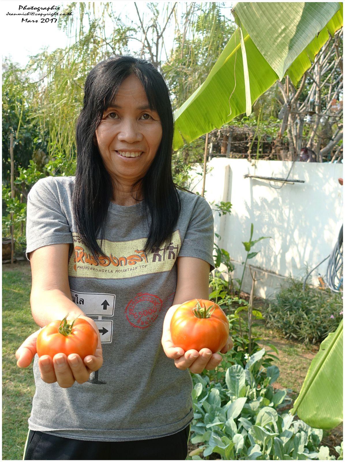 Nos fruits et tomates (Thaïlande Isaan)