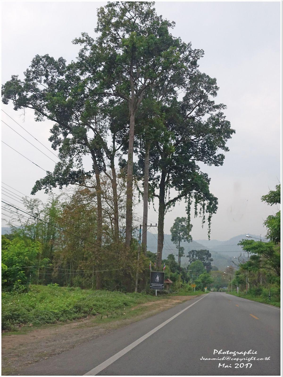La route de Chiang Mai à Mae Hong Son..... (Nord Thaïlande)