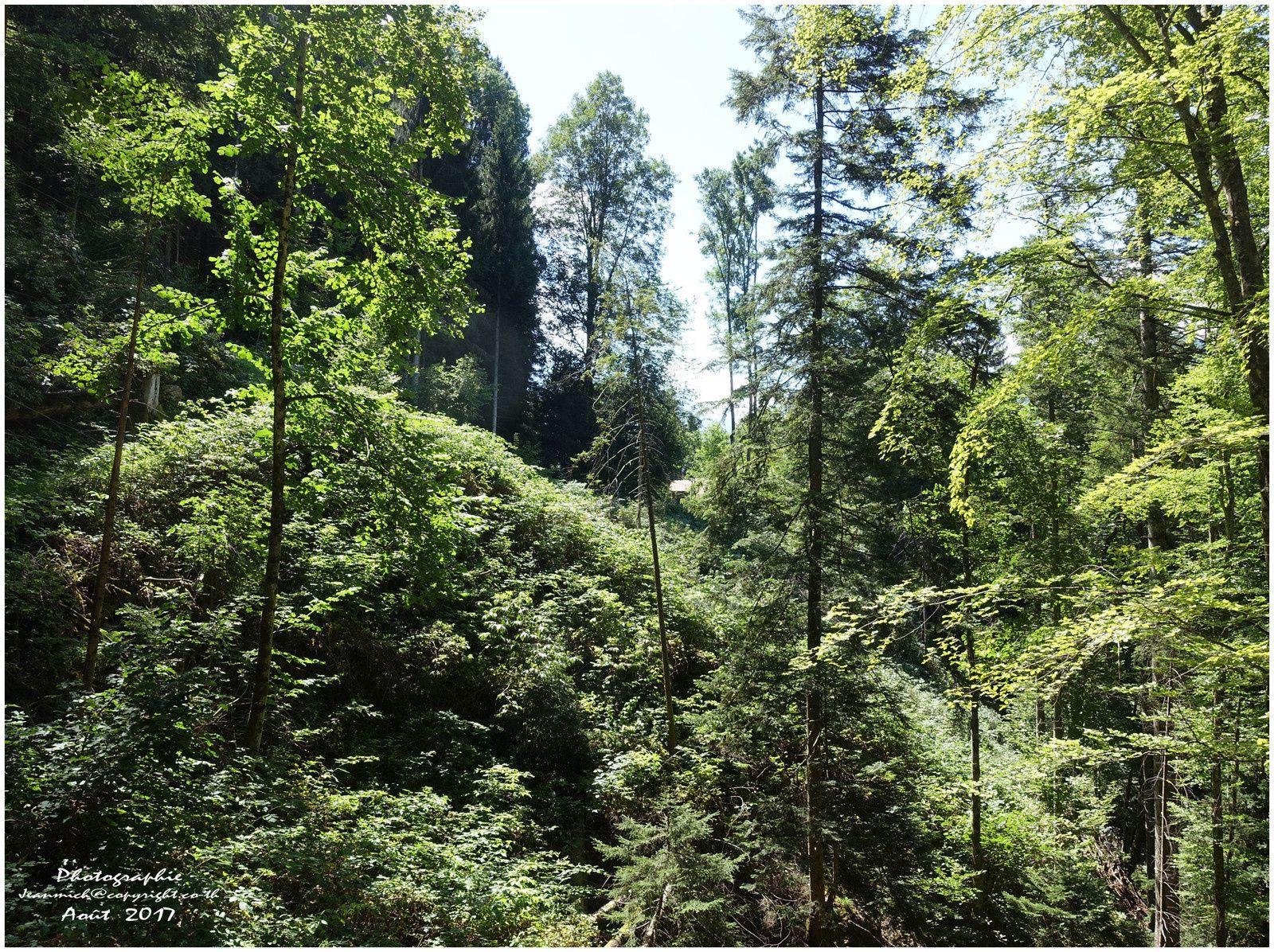 Notre verte vallée (Val d'Illiez, Valais)
