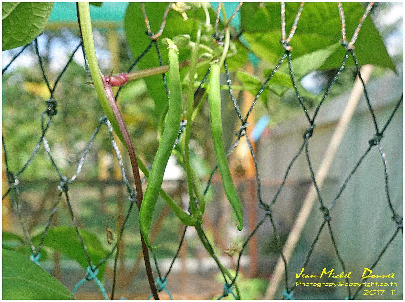 Le jardin en décembre (Thaïlande, Ubonrat)