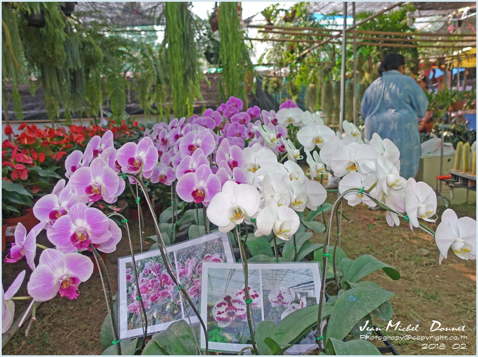 Foire agricole de Khon Kaen (des orchidées à profusion)