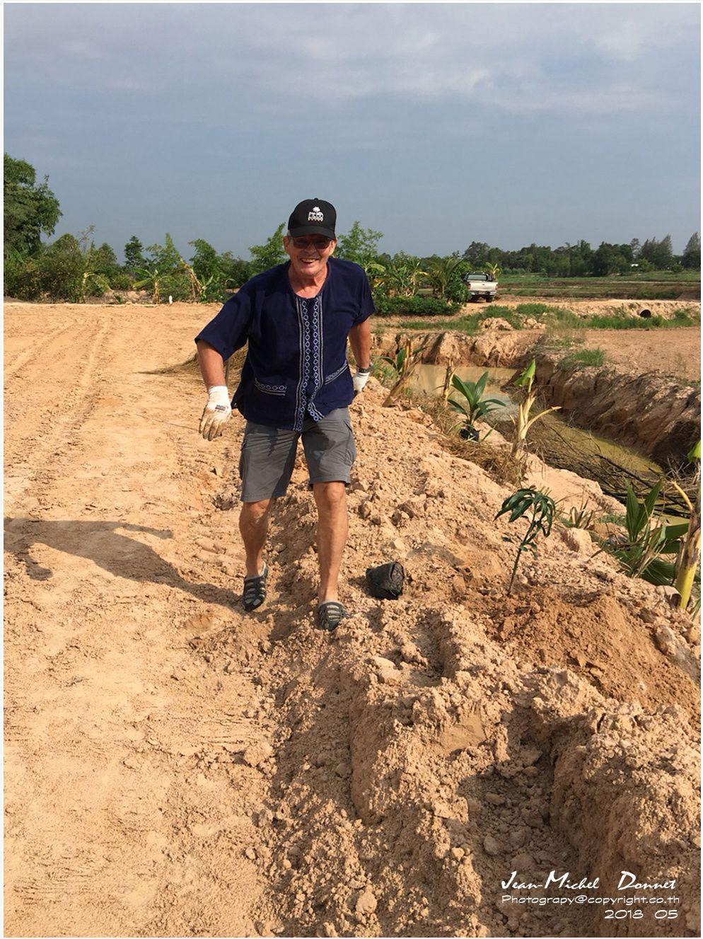 Plantation de manguier dans la province de Roi Et