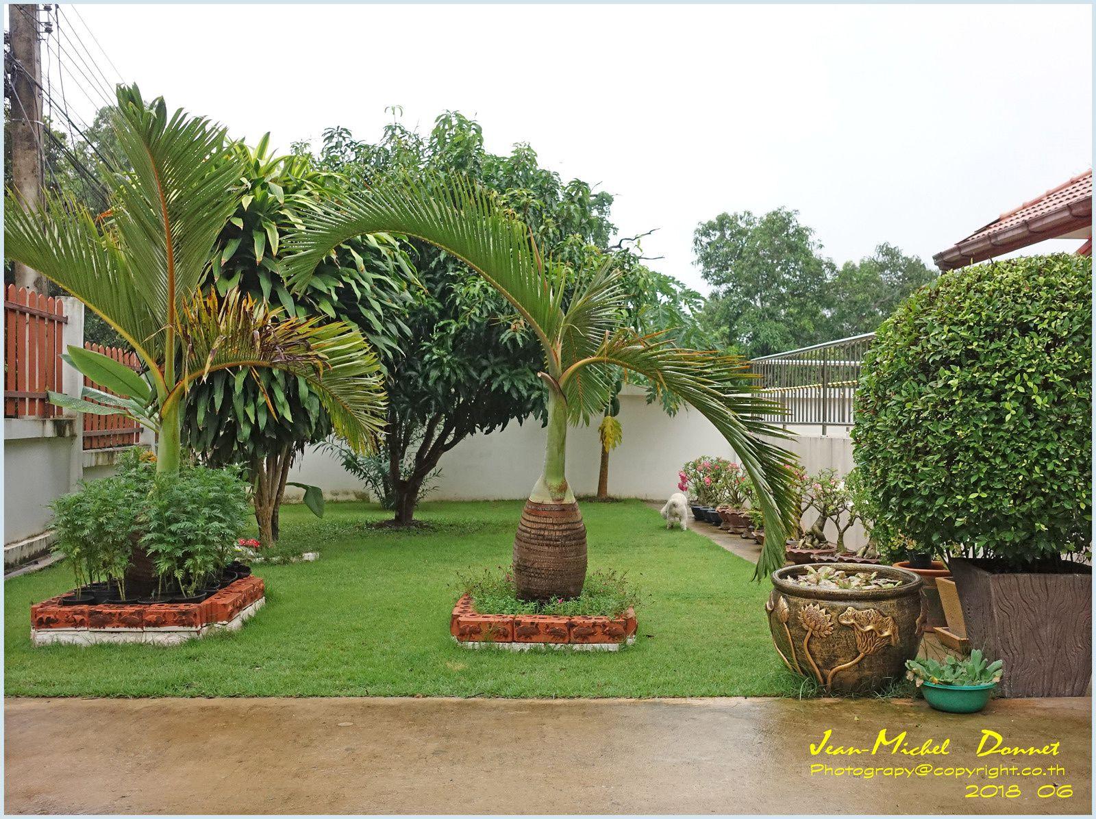 Le jardin apprécie aussi.... (Thaïlande)