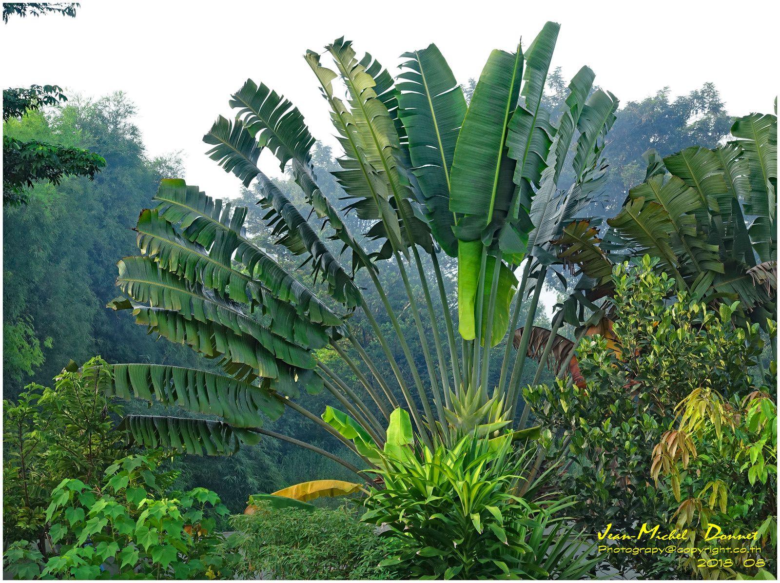Un petit tour dans le jardin tropical.... (Thaïlande)
