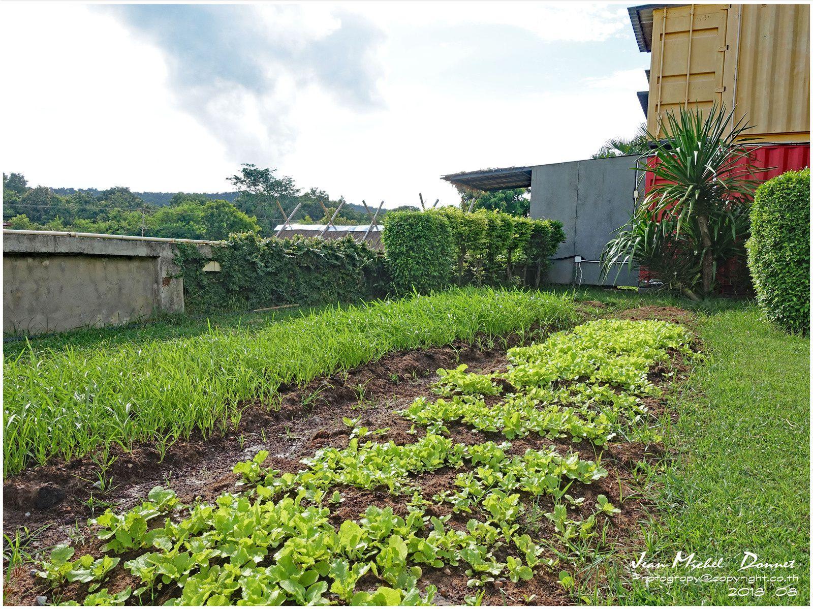 Durant toute l'année, des cultures fleurs, de salades etc devant les rizières.