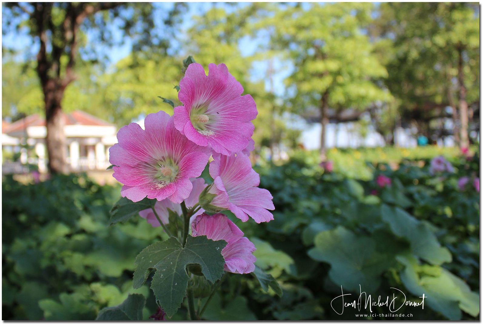 Floralies de Khon Kaen I (Thaïlande)