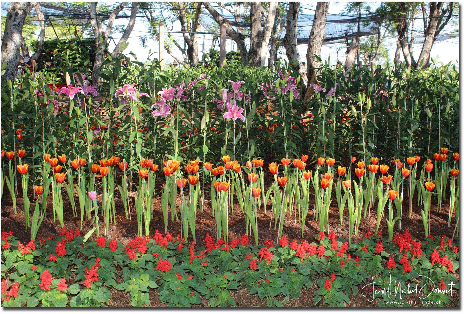 Floralies de Khon Kaen (Fleurs de printemps...)