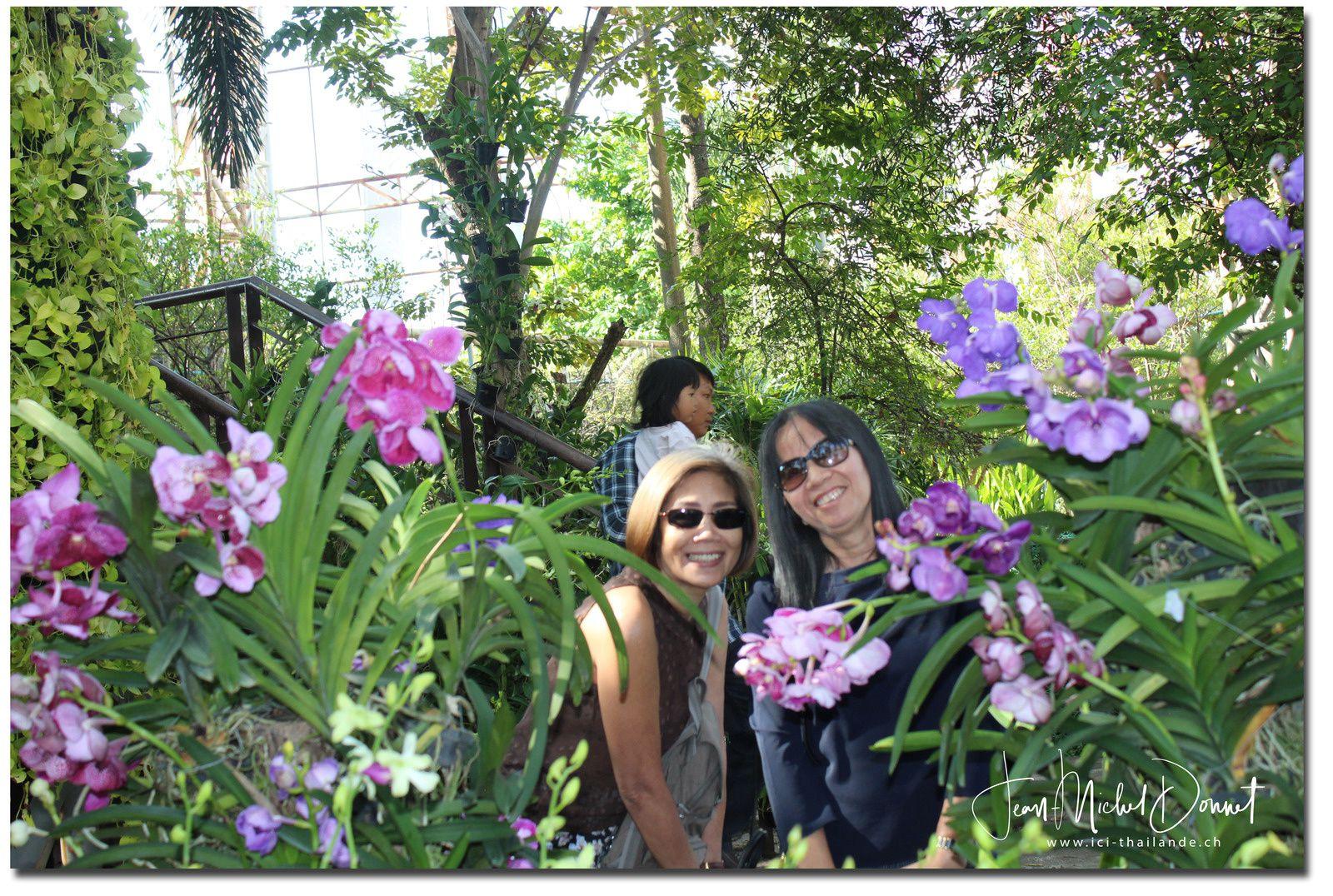 Les orchidées (floralies de Khon Kaen)