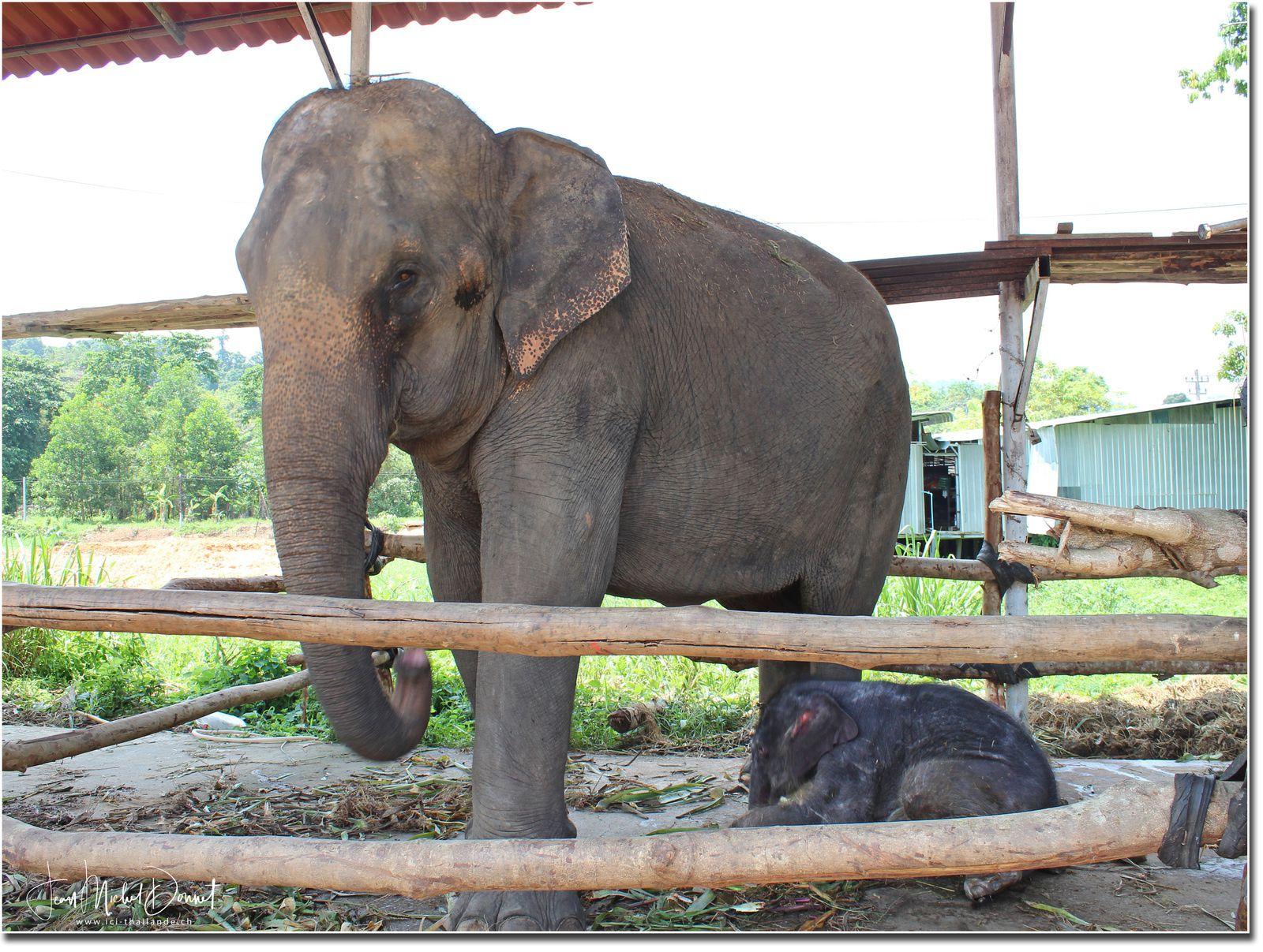 Un petit tour à dos d'éléphant (Ko Chang)