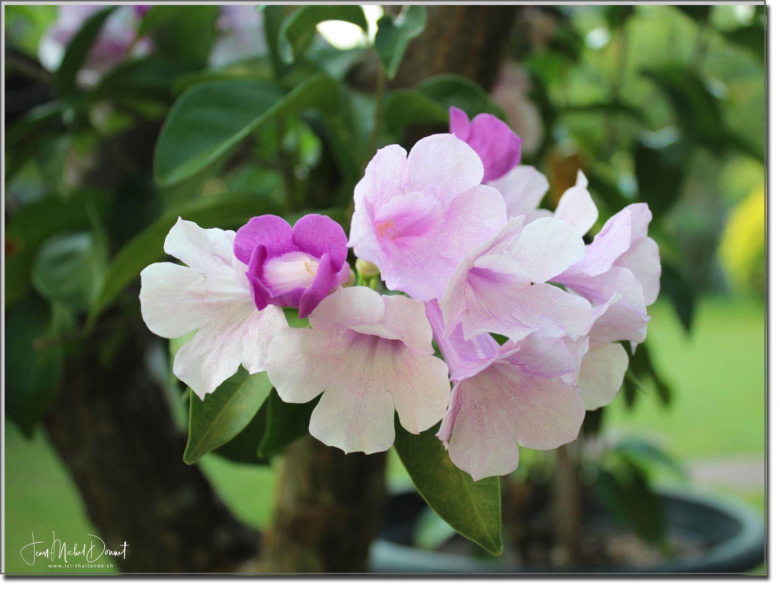 Des fleurs et encore des fleurs (Thaïlande)