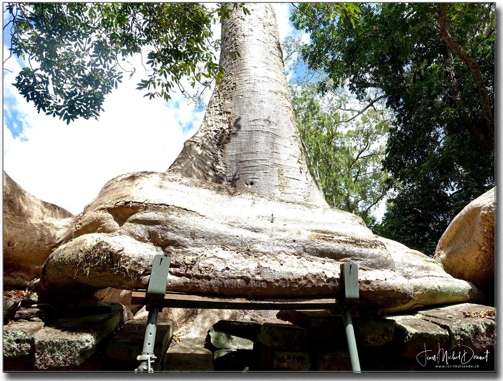 Ta Prohm (Cambodge, sites d'Angkor)