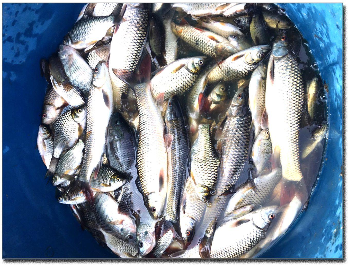 Un dimanche de pêche (Thaïlande)