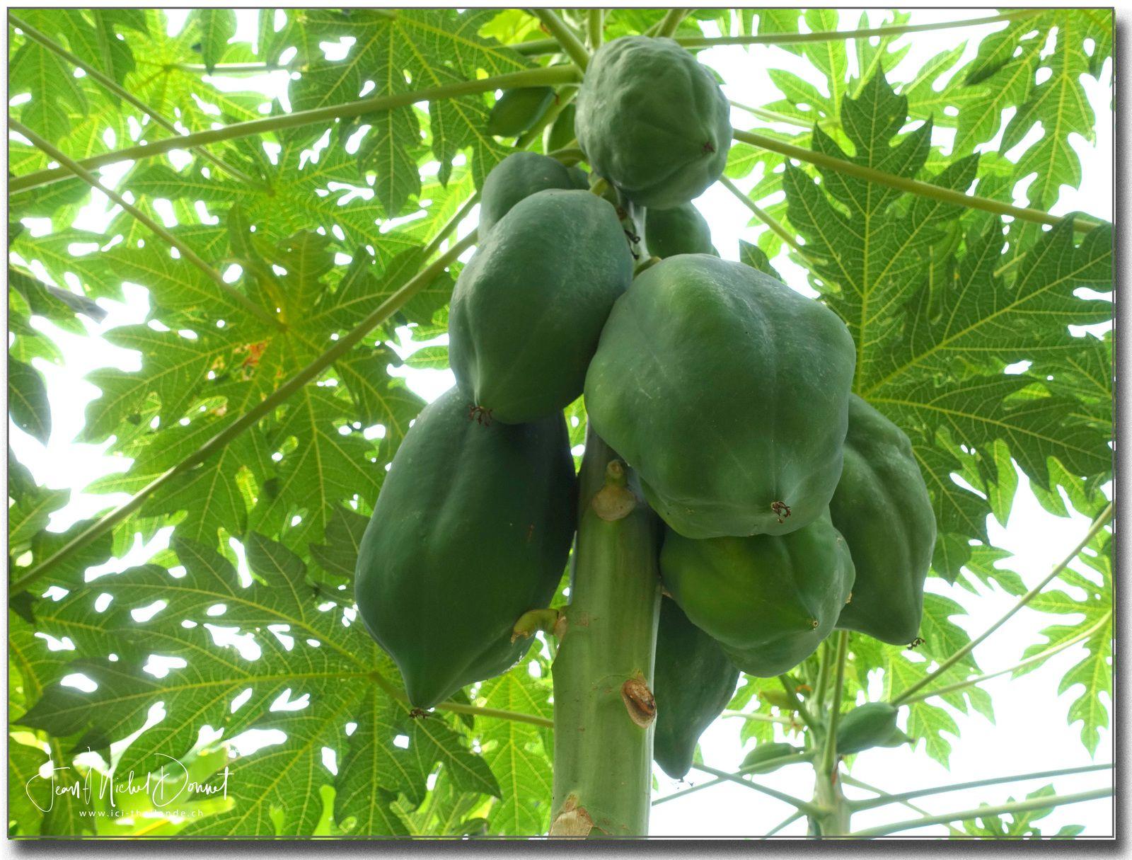 et toujours les papayes....