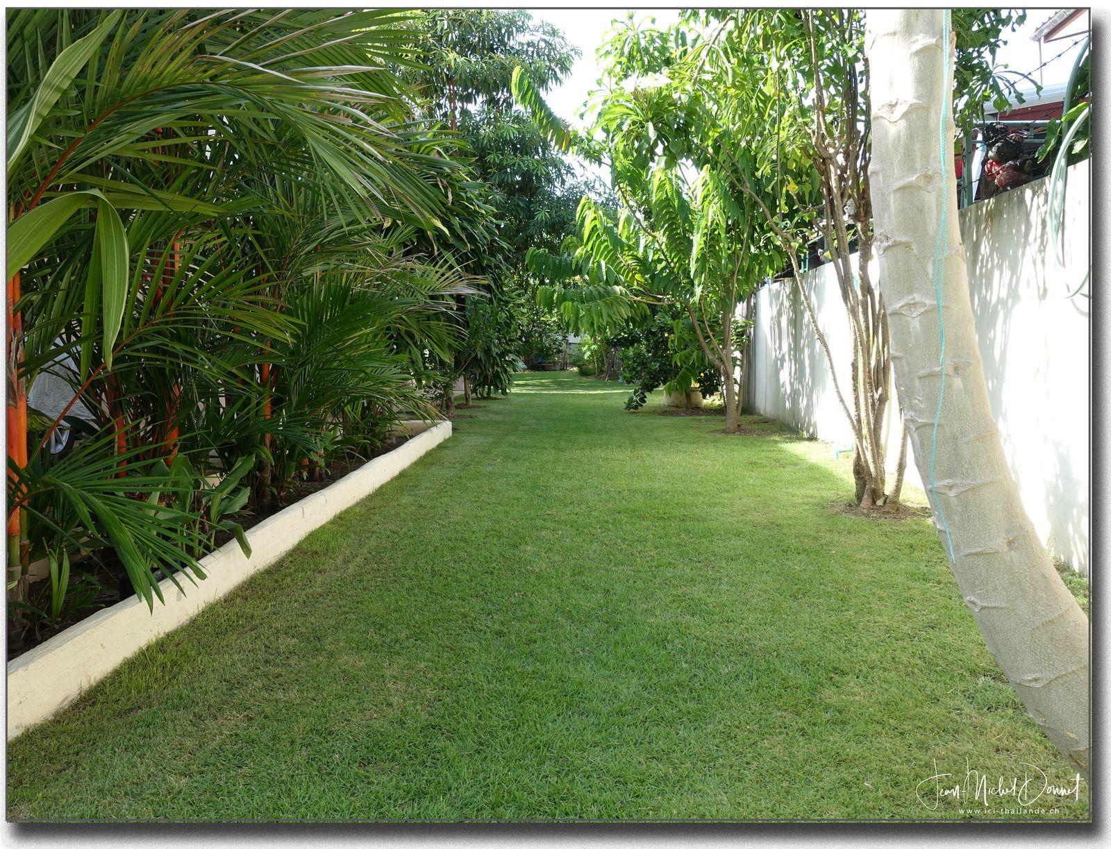 Le jardin après la tonte du vendredi....