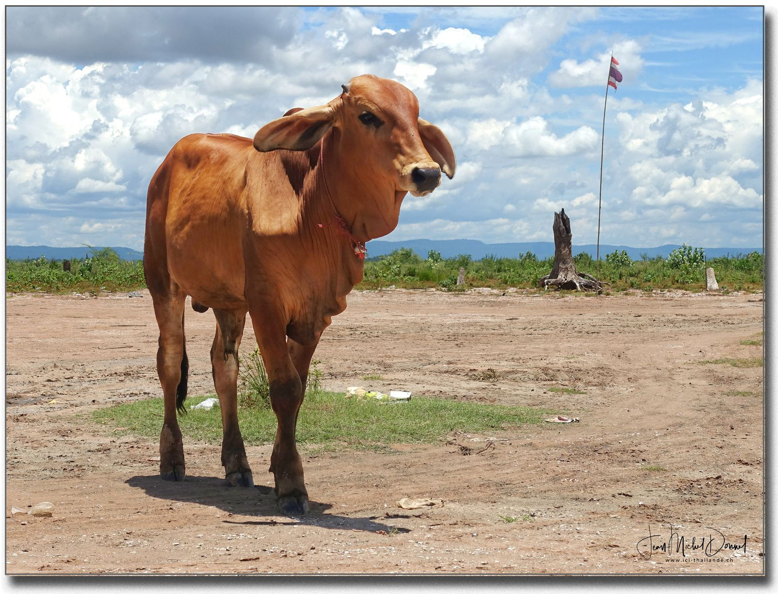 Elles profitent les vaches, leur espace s'est fortement agrandi.