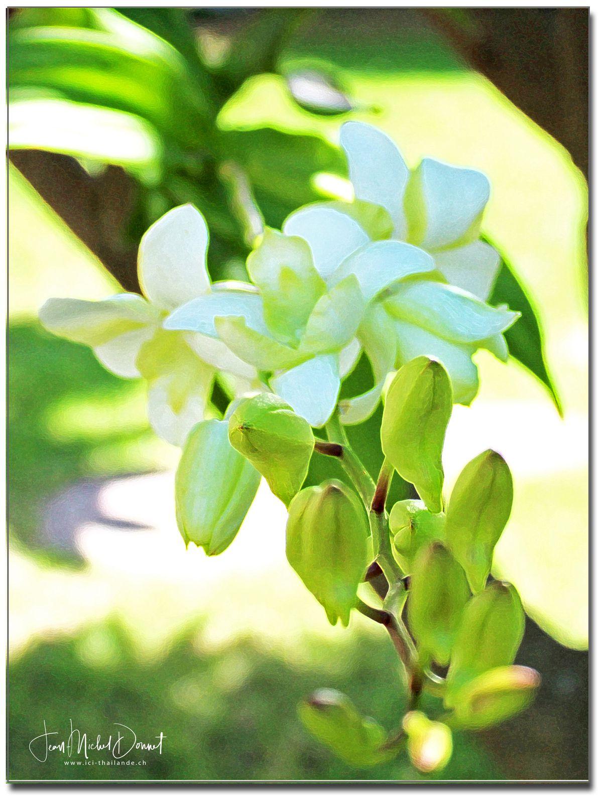 Beautés de la nature (Thaïlande)