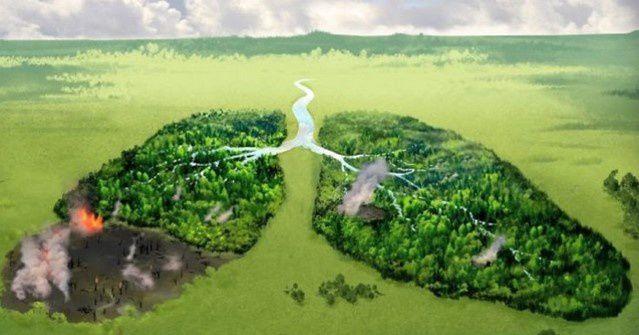 forêt amazonienne , poumon de la planète