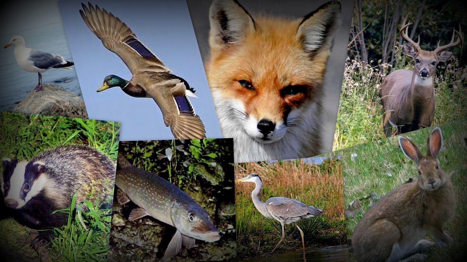 la Faune - Source roxanneetmaudeitalie.blogspot.com