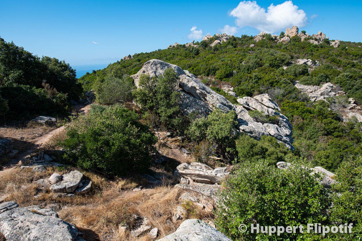 Le sentier des crêtes au dessus d'Ajaccio.. Le sentier serpente au milieu du maquis Corse.