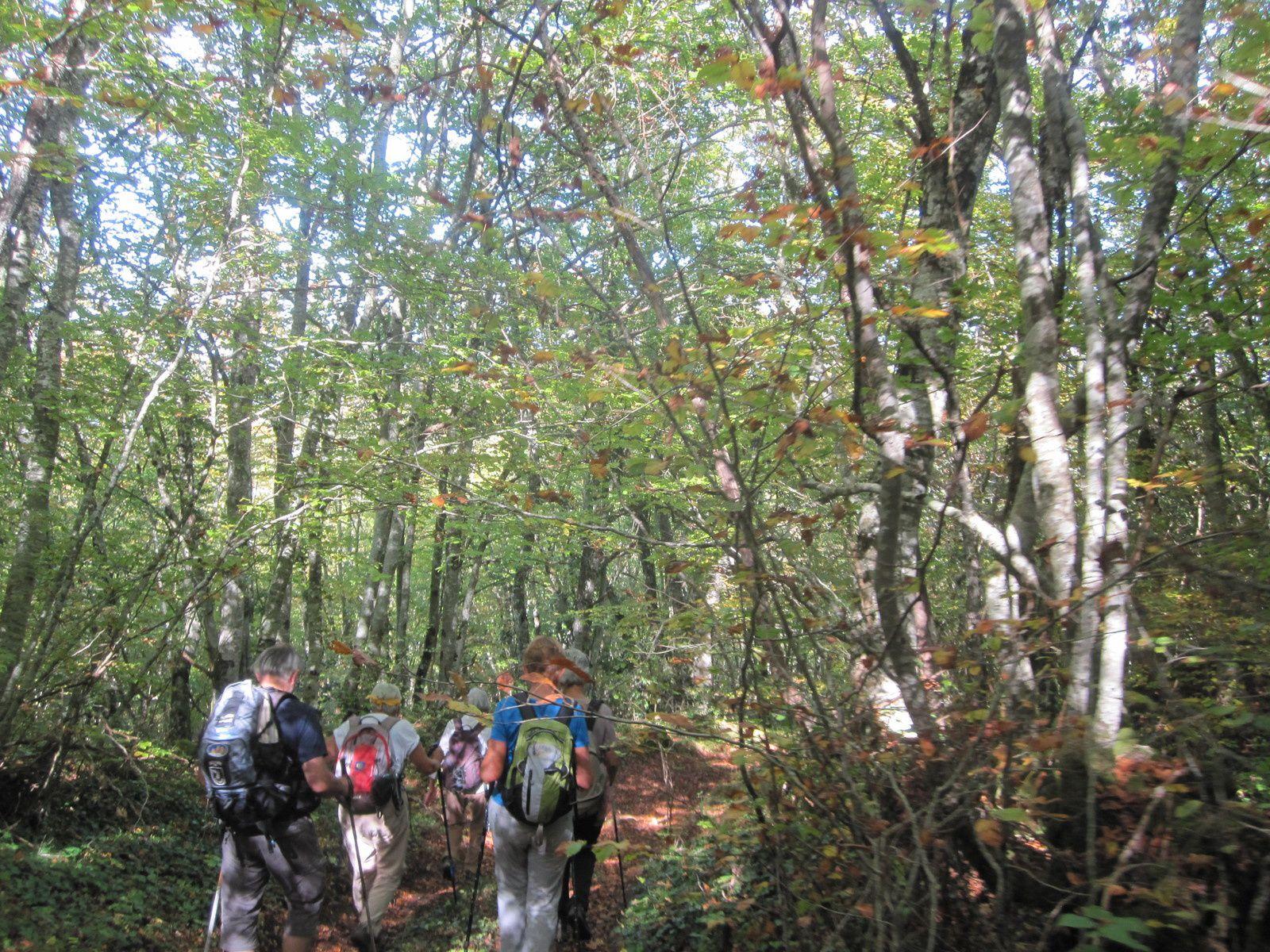 montée vers le Bois de Galinières