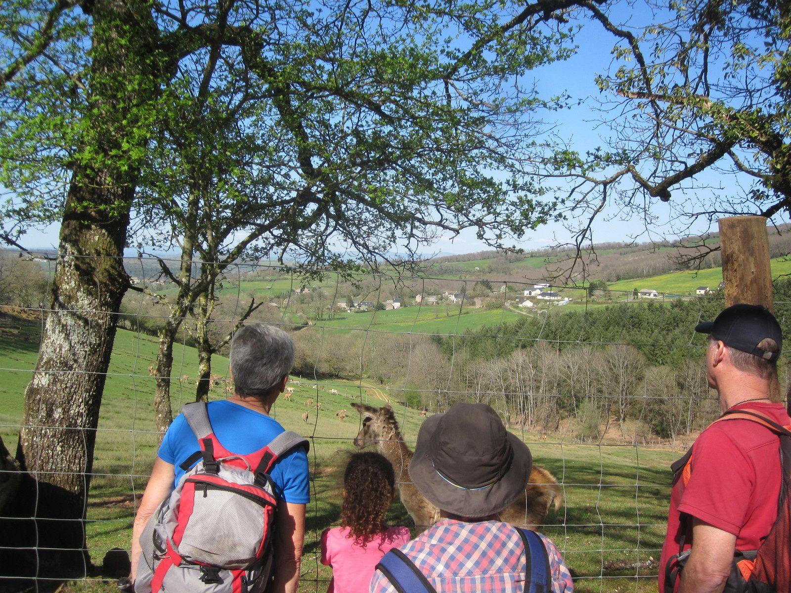 biches, cerfs, moufflons, lamas, faons : les uns s'approchent, les autres fuient à notre arrivée