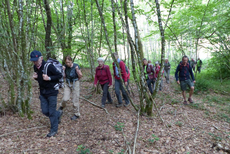 Un sentier ombragé permet de découvrir la Corrèze forestière en suivant le ruisseau du Lieutarêt puis celui de la Soudeillette.