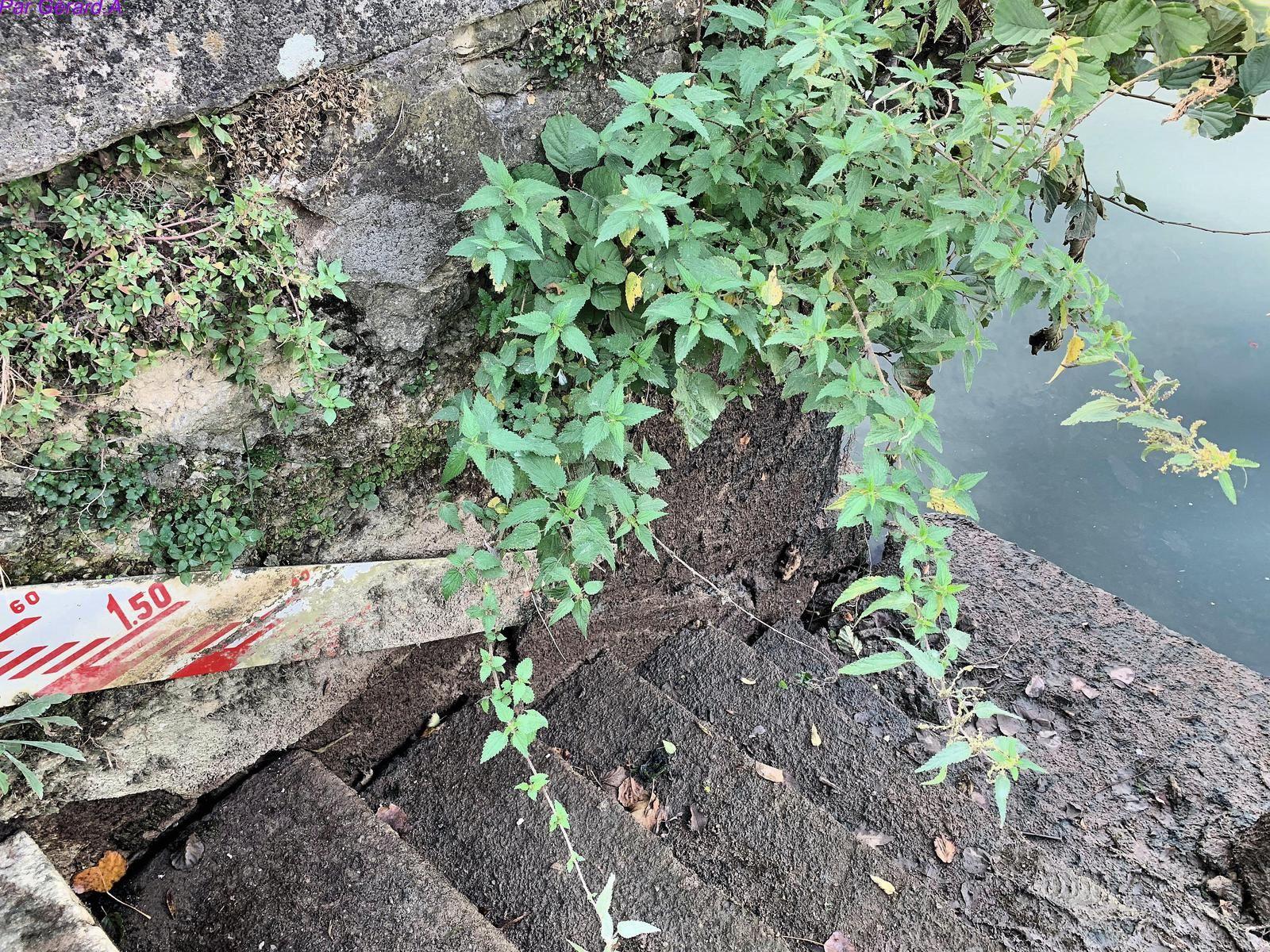 Les secrets des bords de l'Yonne quand elle s'asseche.