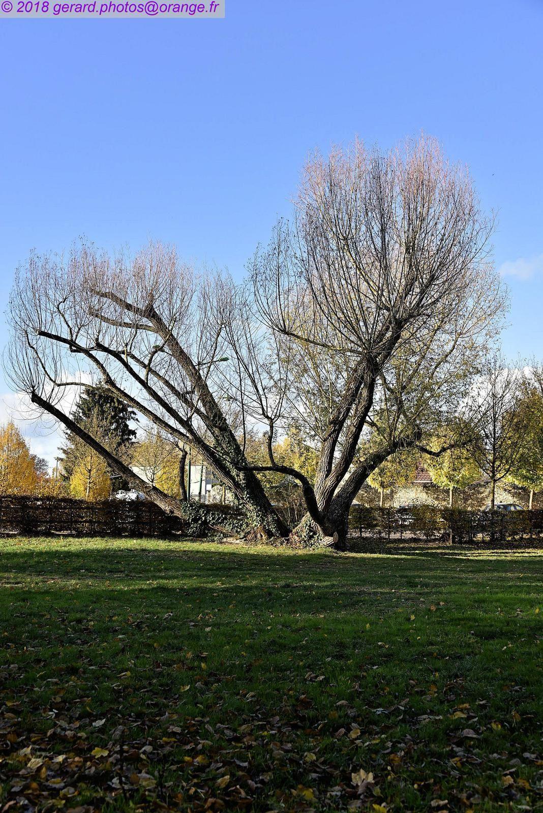 Promenade aux couleurs de l'automne au parc de la Balastière à Saint Clément 89100