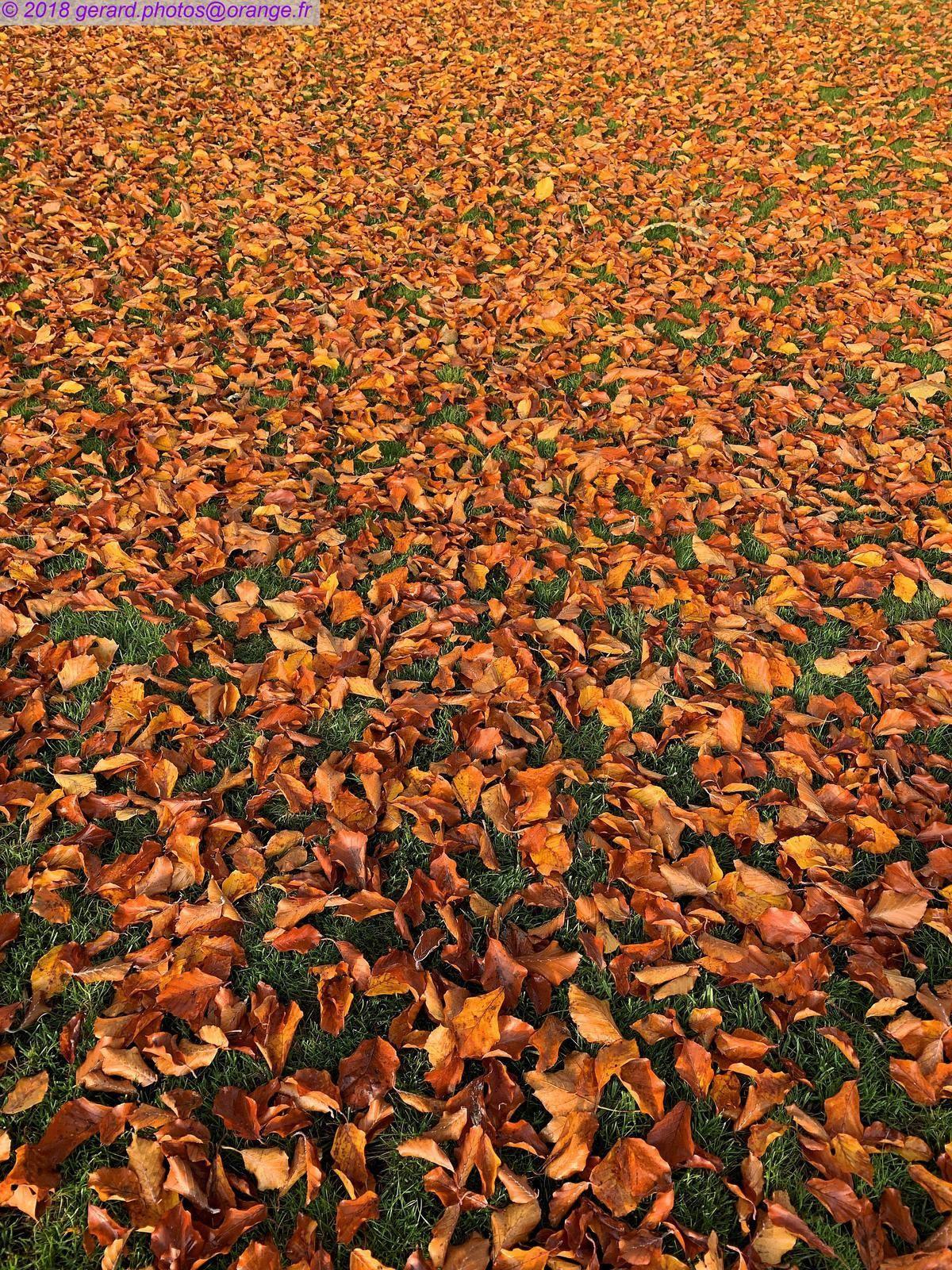 Couleurs d'automne, square jean Cousin à Sens.