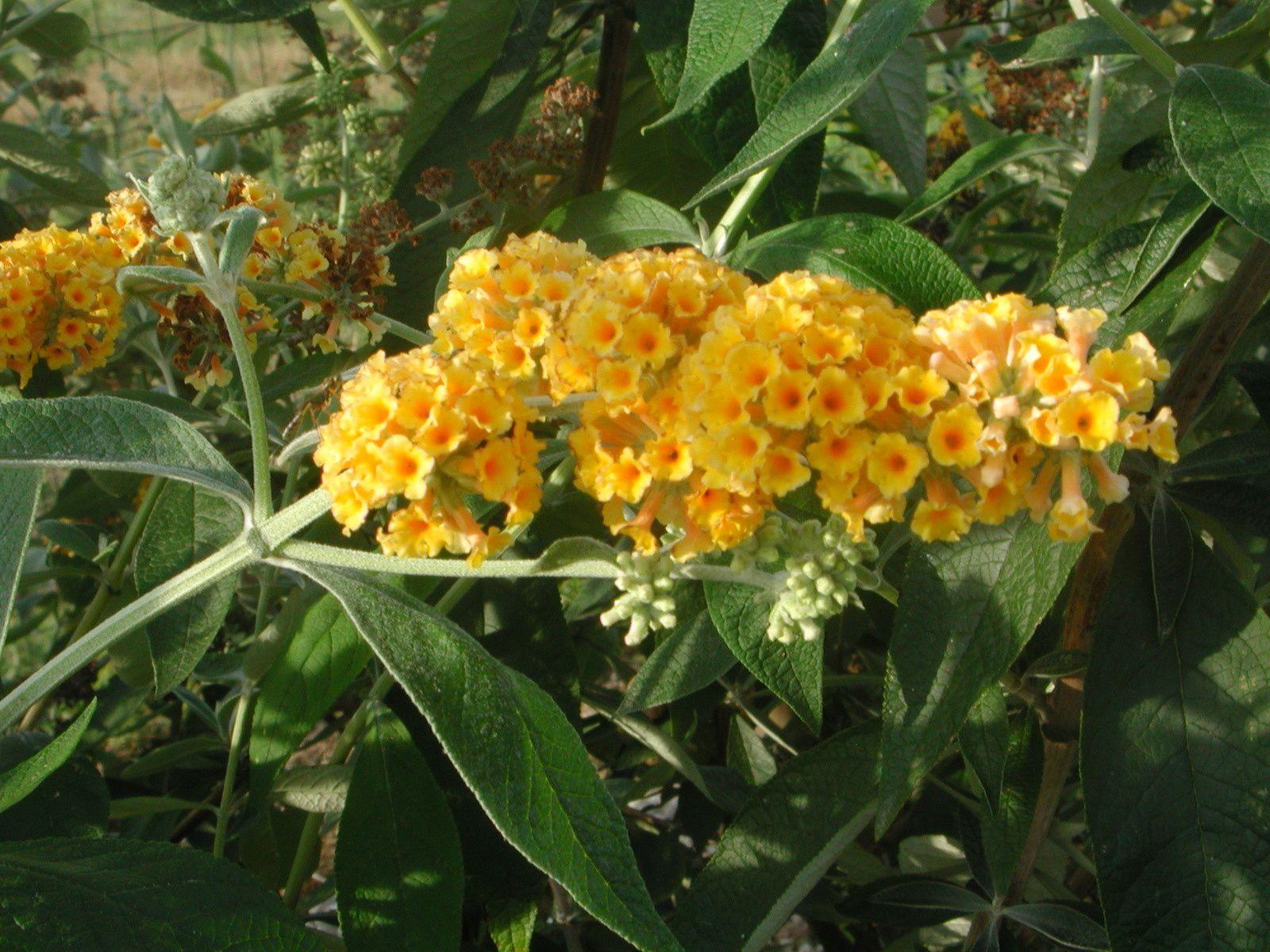 L'attractivité florale est l'arme de stimulation de toute les espèces animales...