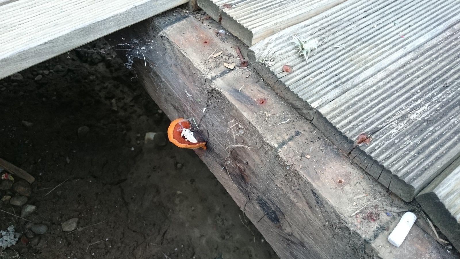 ALTERATION PROFONDE du support bois avec DEGRADATION TOTALE...