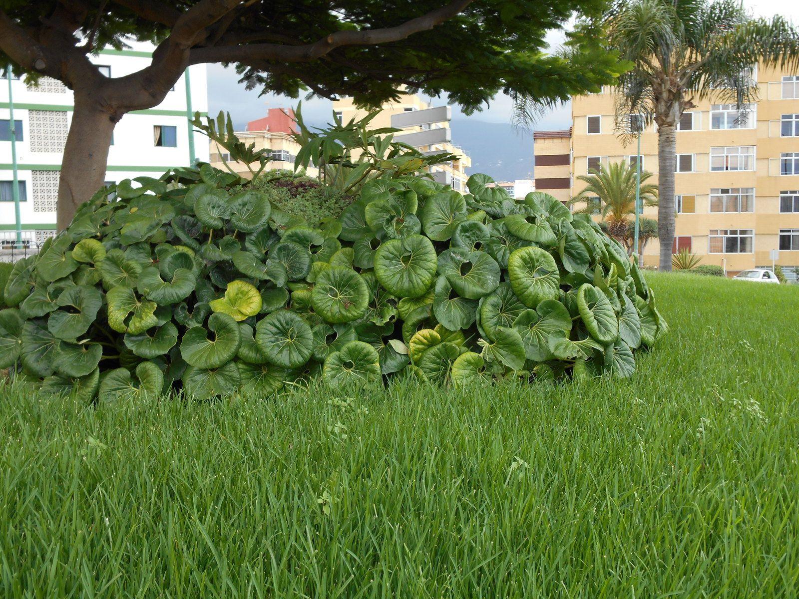 Végétation étonnamment riche...