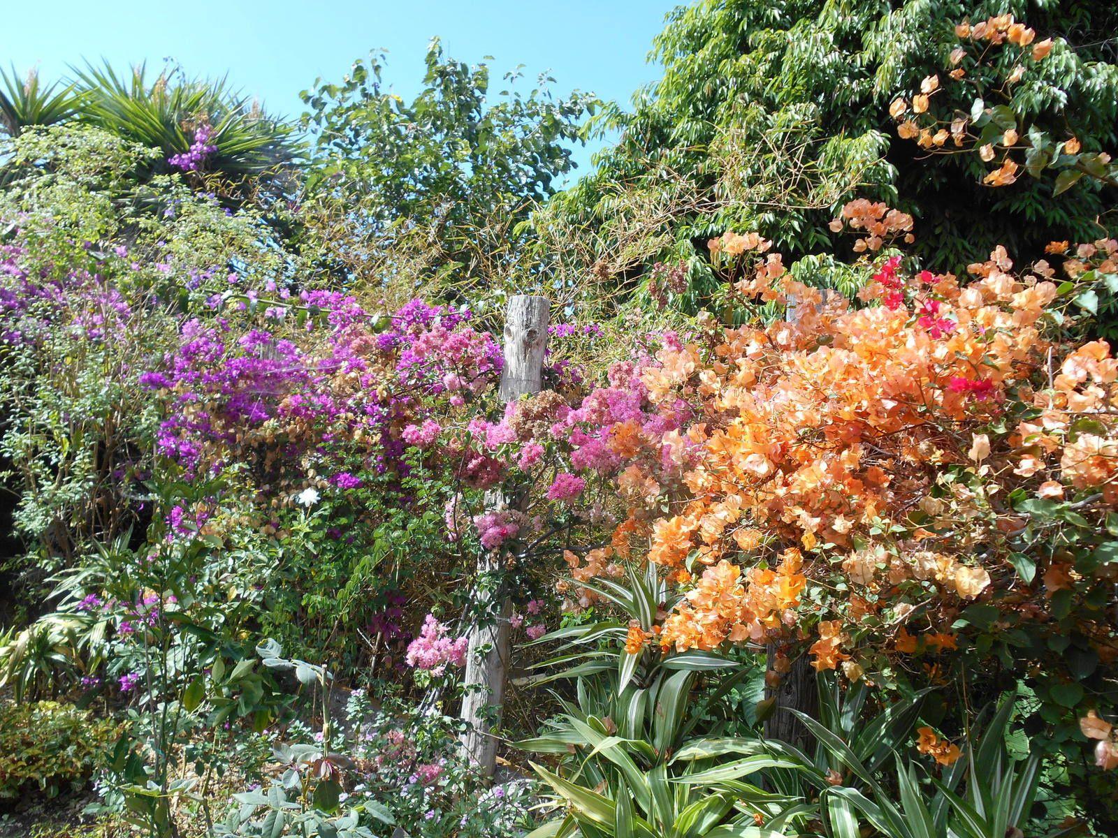 Les jardins de Puerto de la Cruz. Île de Ténérife