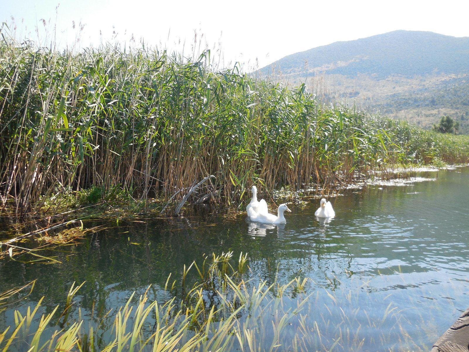 Le delta de la Neretva (Bosnie-Croatie)