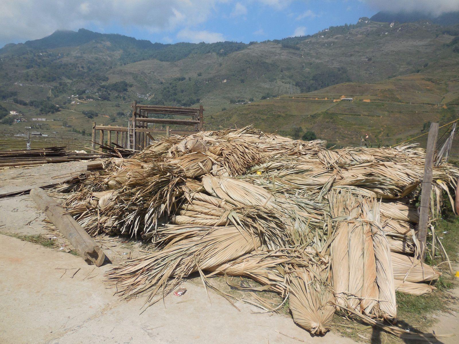 Feuilles de palmiers qui seront  les futures toitures des maisons...