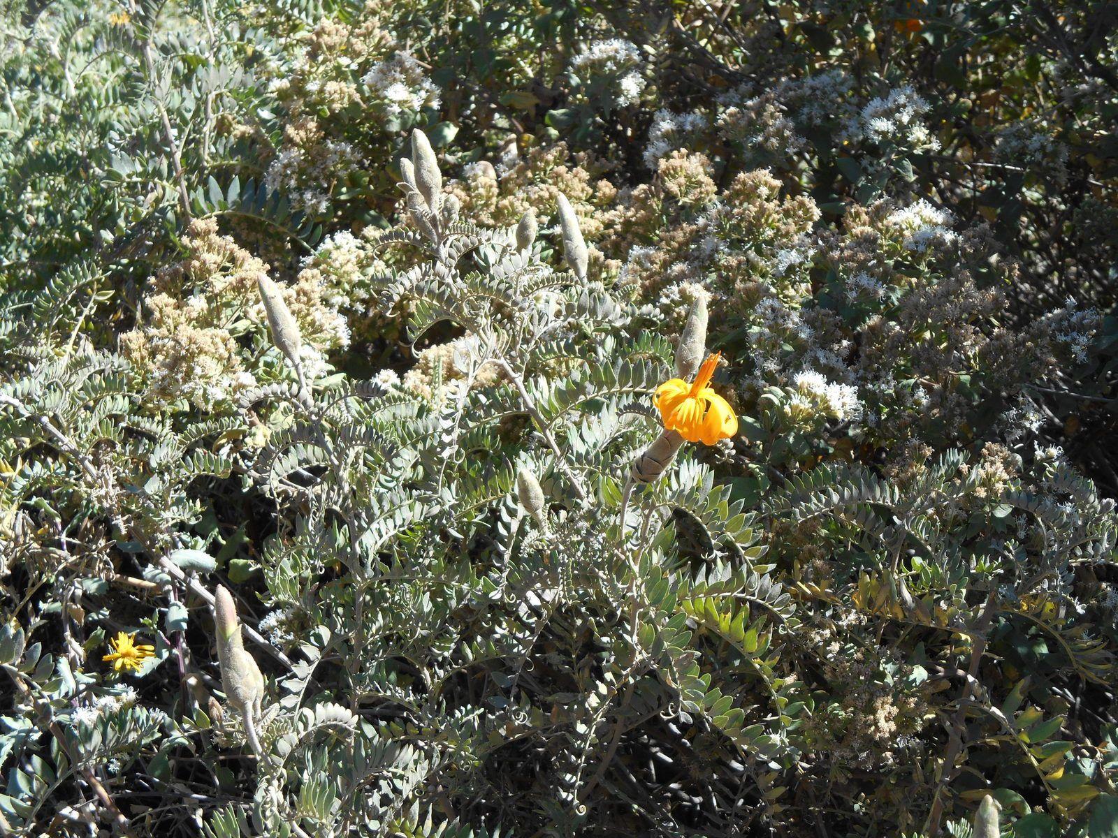 Jour 3: Le Canyon de Colca