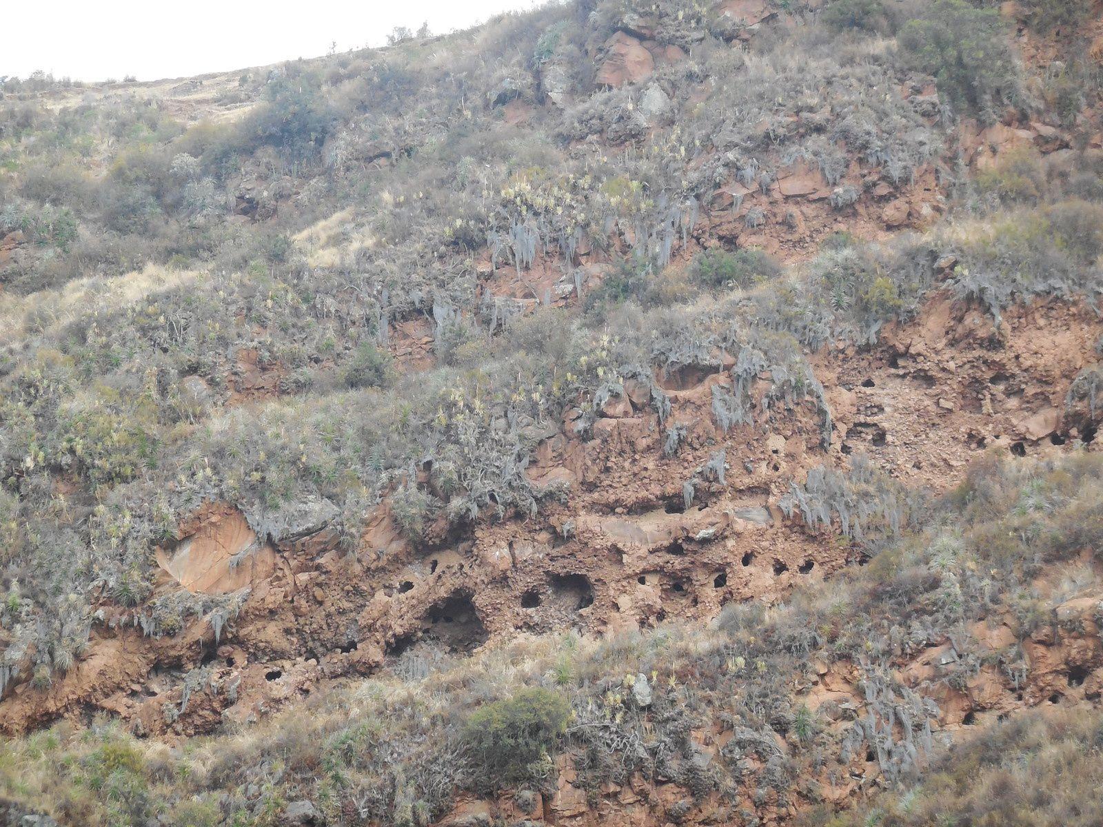 Sur la falaise, face aux ruines du site de Pisaq, de nombreux trous: il s'agit du cimetière de Tankanamarka. Les Incas y enterraient leurs défunts avec des objets de valeur. A ce jour, les tombes ont toutes été pillées!