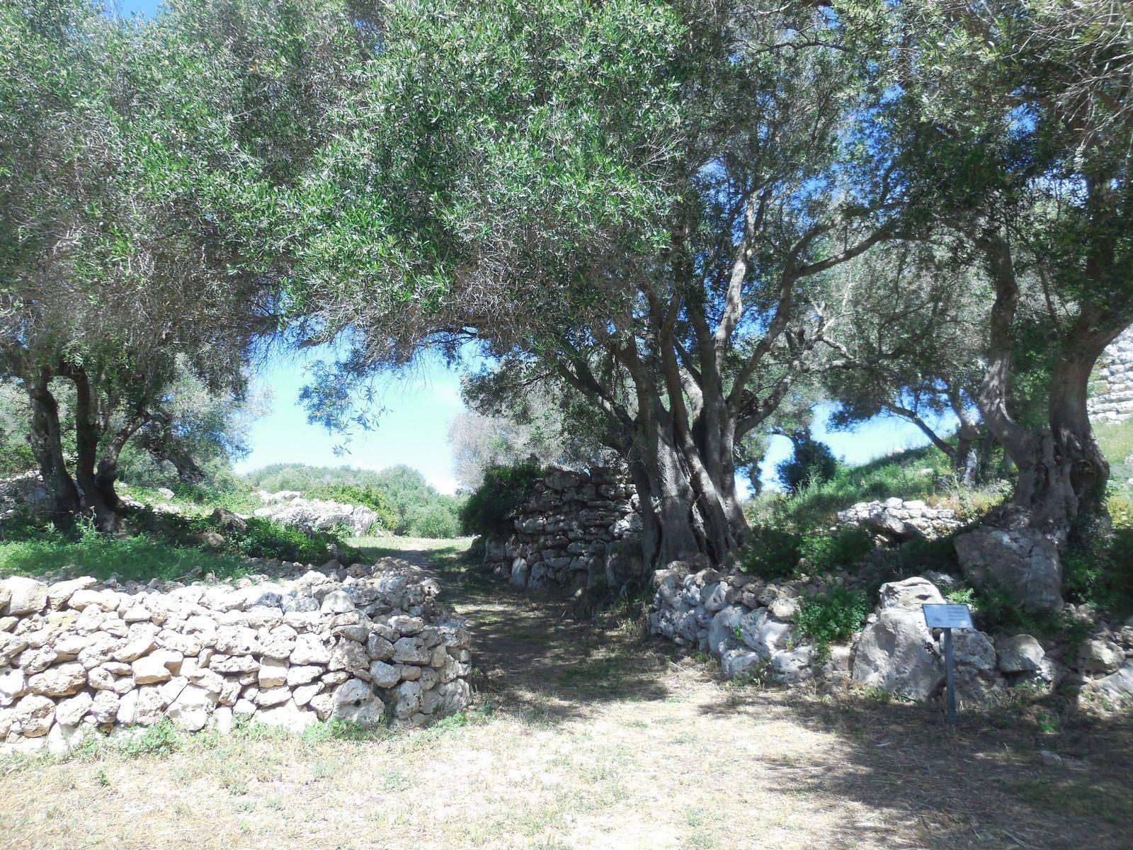 Minorque: Monte Toro,Talati de dalt et Naveta des Tudon