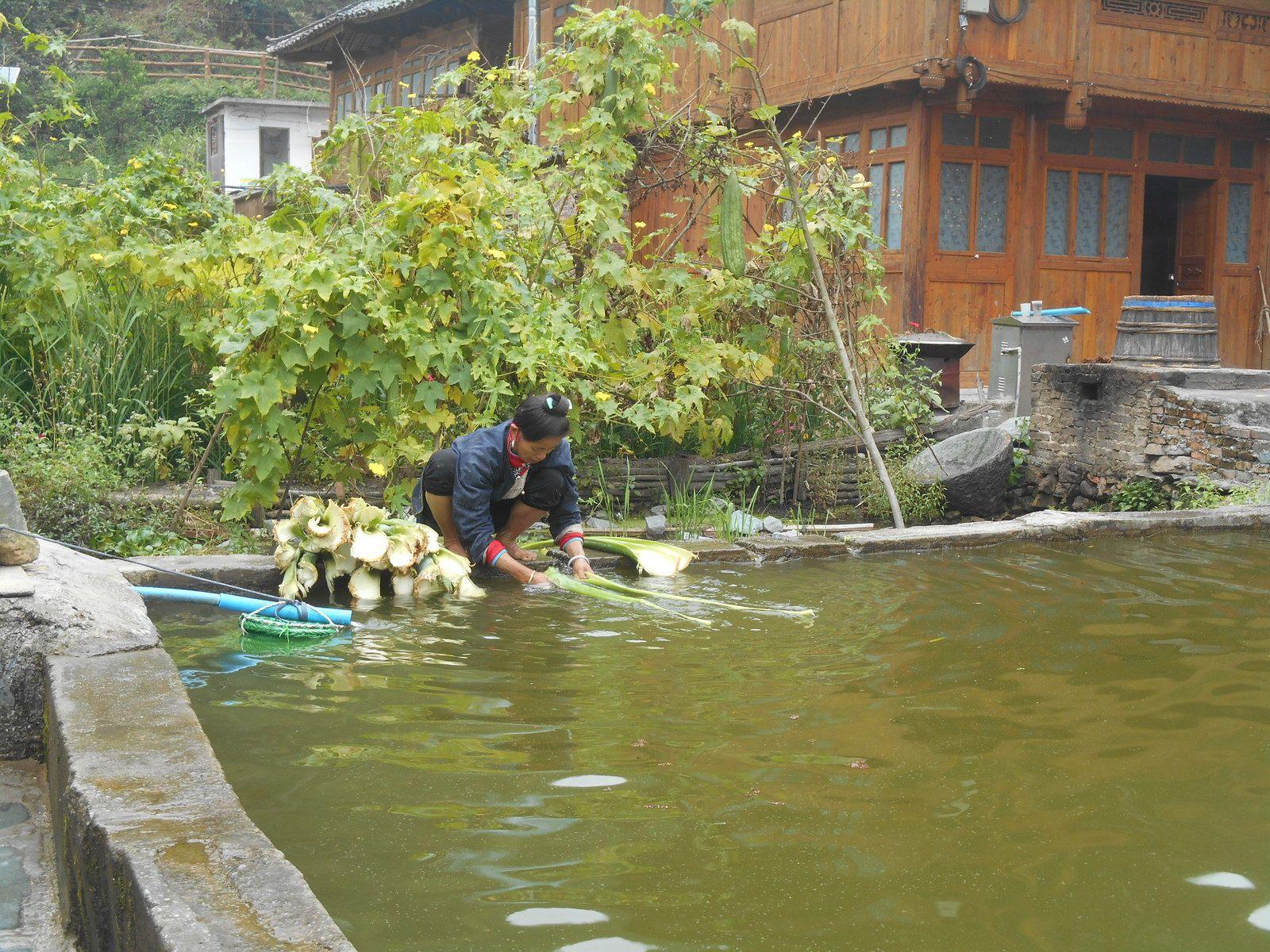 Chine: jour 10- Une boucle autour du village de Zhaoxing.-1-