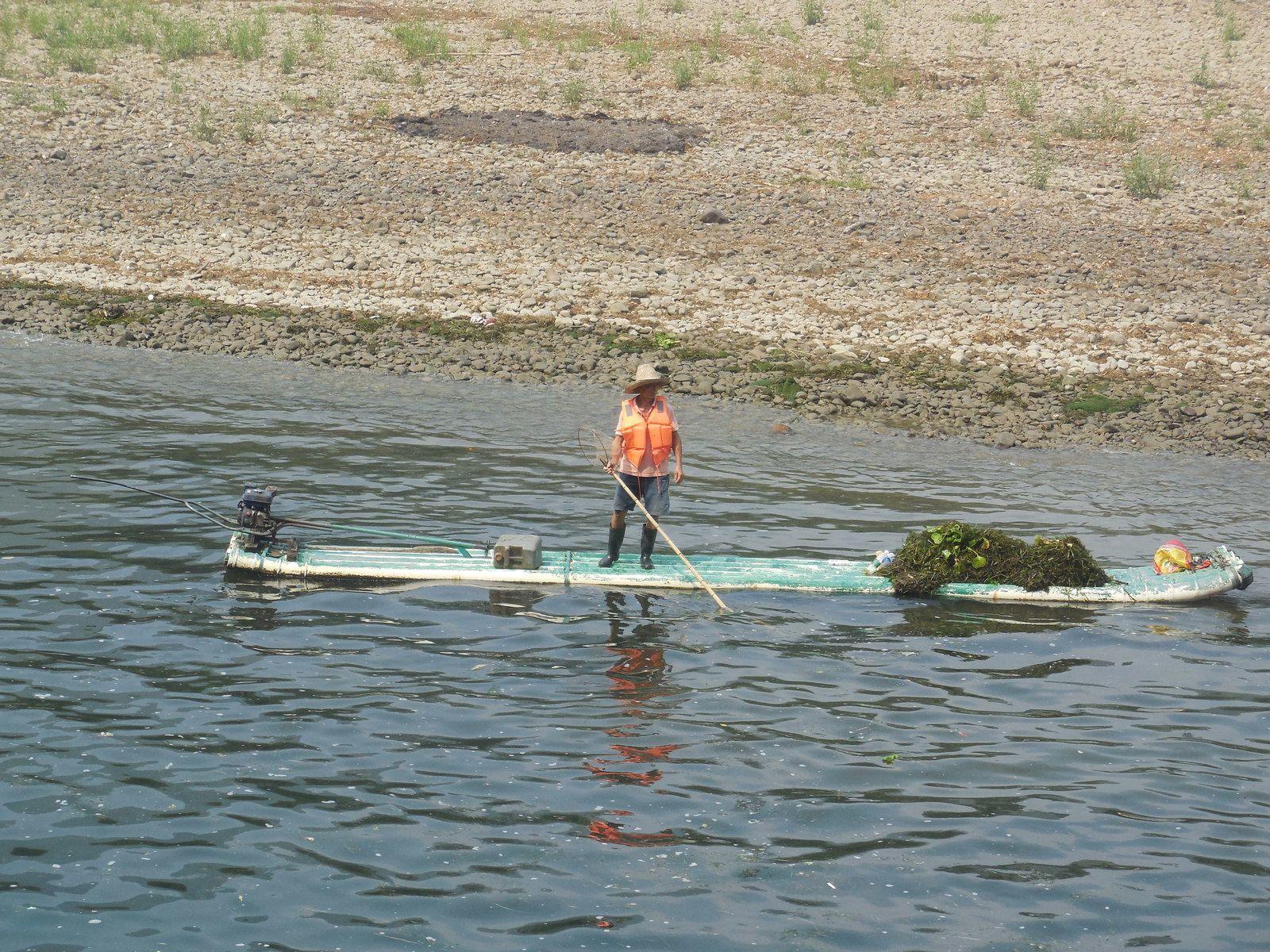 Ramassage d'algues le long de la rivière...