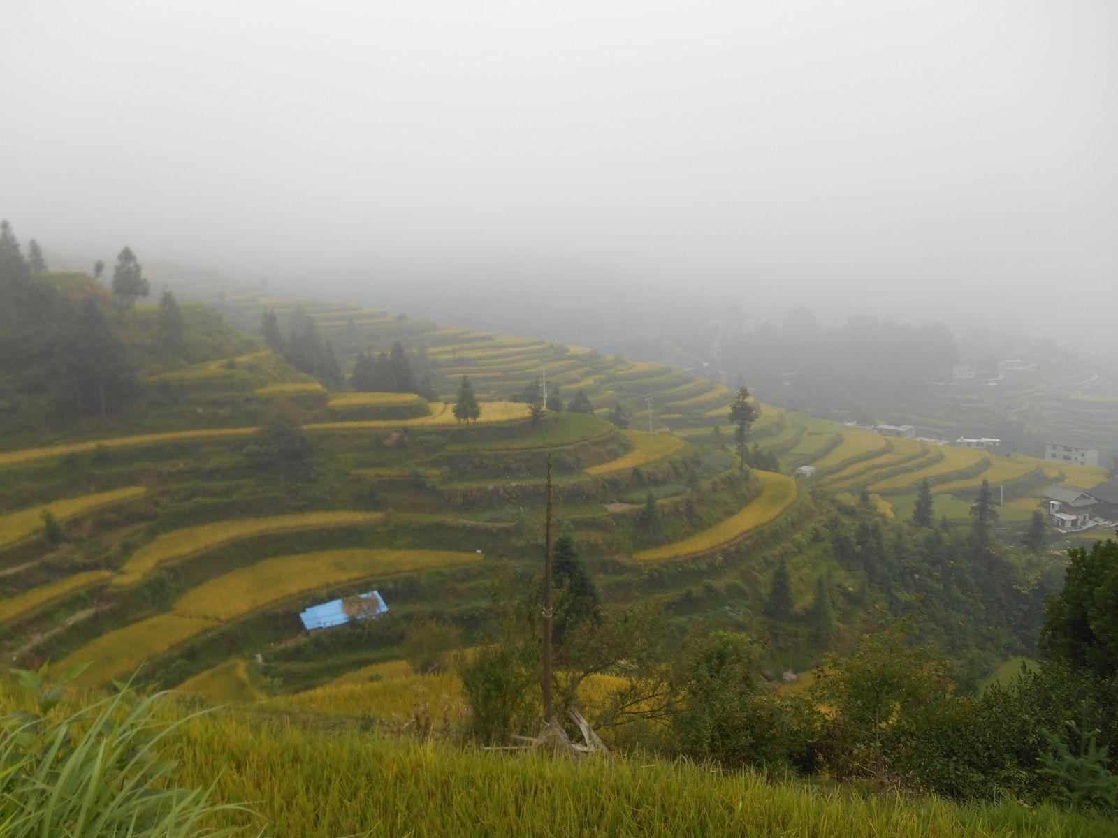 Le village est entouré de nombreuses rizières en terrasse...