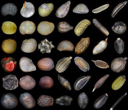 Comment conserver les graines de légumes?