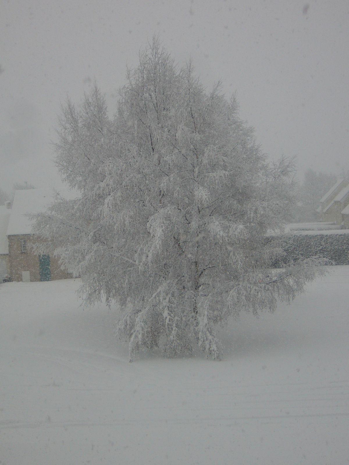 8 Janvier 2010 en Normandie…
