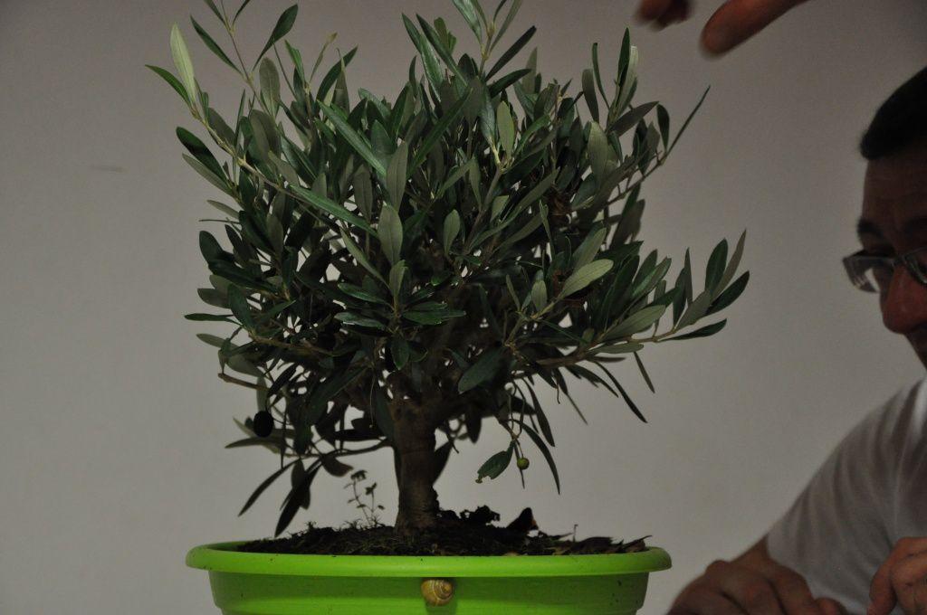 Un passage en revue des arbres nécésitants une petite ( ou grosse ) retouche
