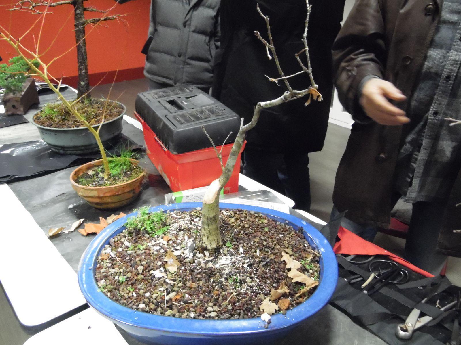 """Lors de cette réunion, nous étions assez nombreux à venir travailler nos arbres ! Nous avons eu la chance d'avoir à nos côtés la céramiste """" Mitra Ghazaï """" qui nous a fait découvrir quelques-unes de ses créations."""