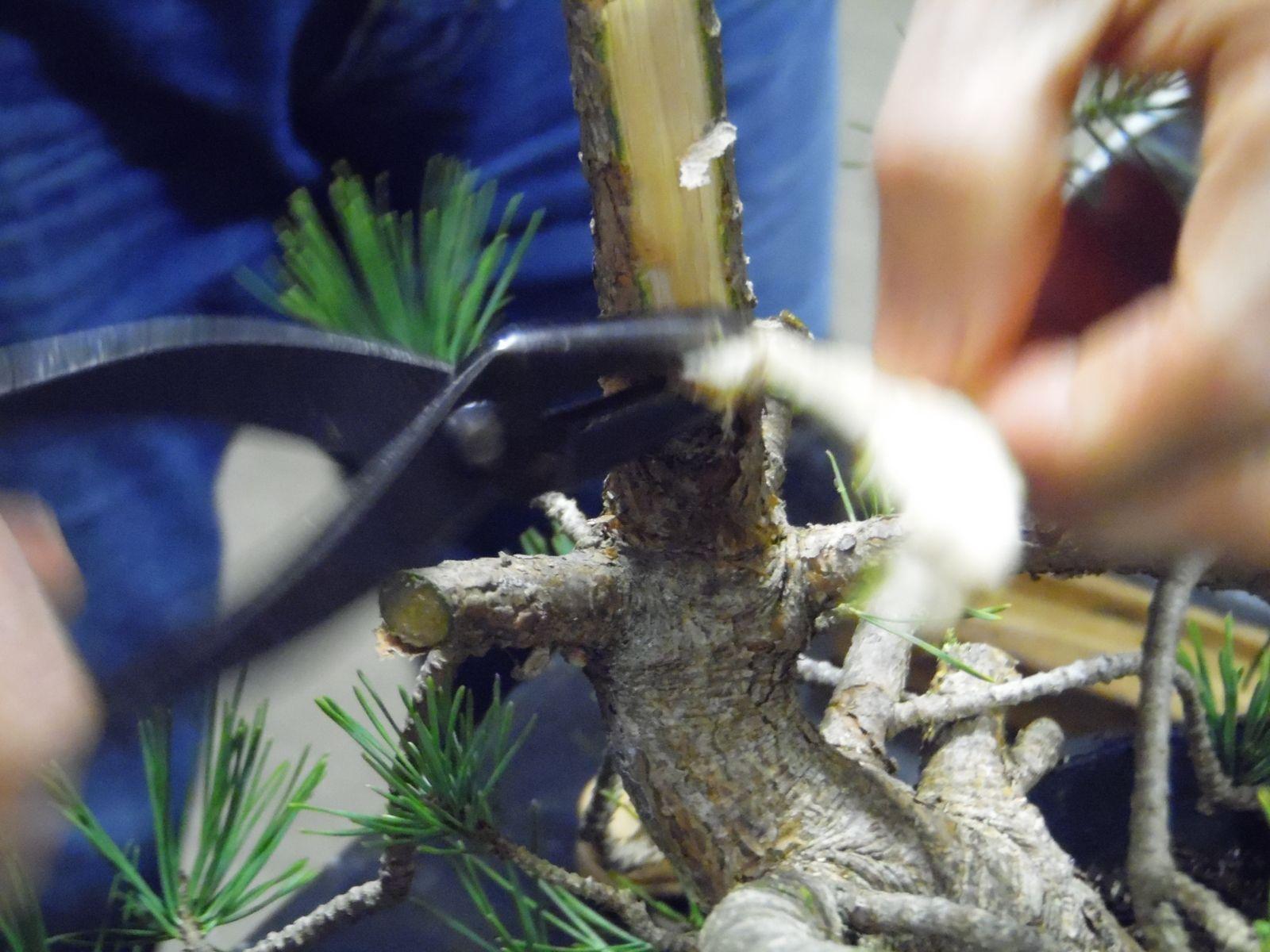 Bonsoir ! Pour vous faire patienter jusqu'au stage de dimanche prochain animé par Ronan, je vous fais parvenir les photos de notre dernière réunion. En début de soirée, nous avons eu le droit à une petite démo réalisée par Francis, qui a été faite sur un pin qui n'était pas très facile... Après ça nous avons tous fait nos petits, ou gros travaux sur nos arbres !